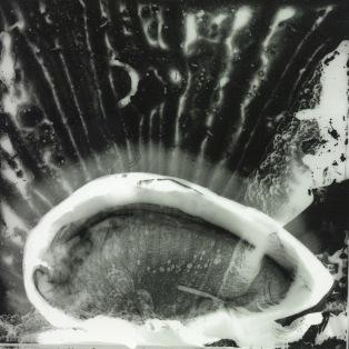 Paysage2-cliché-verre